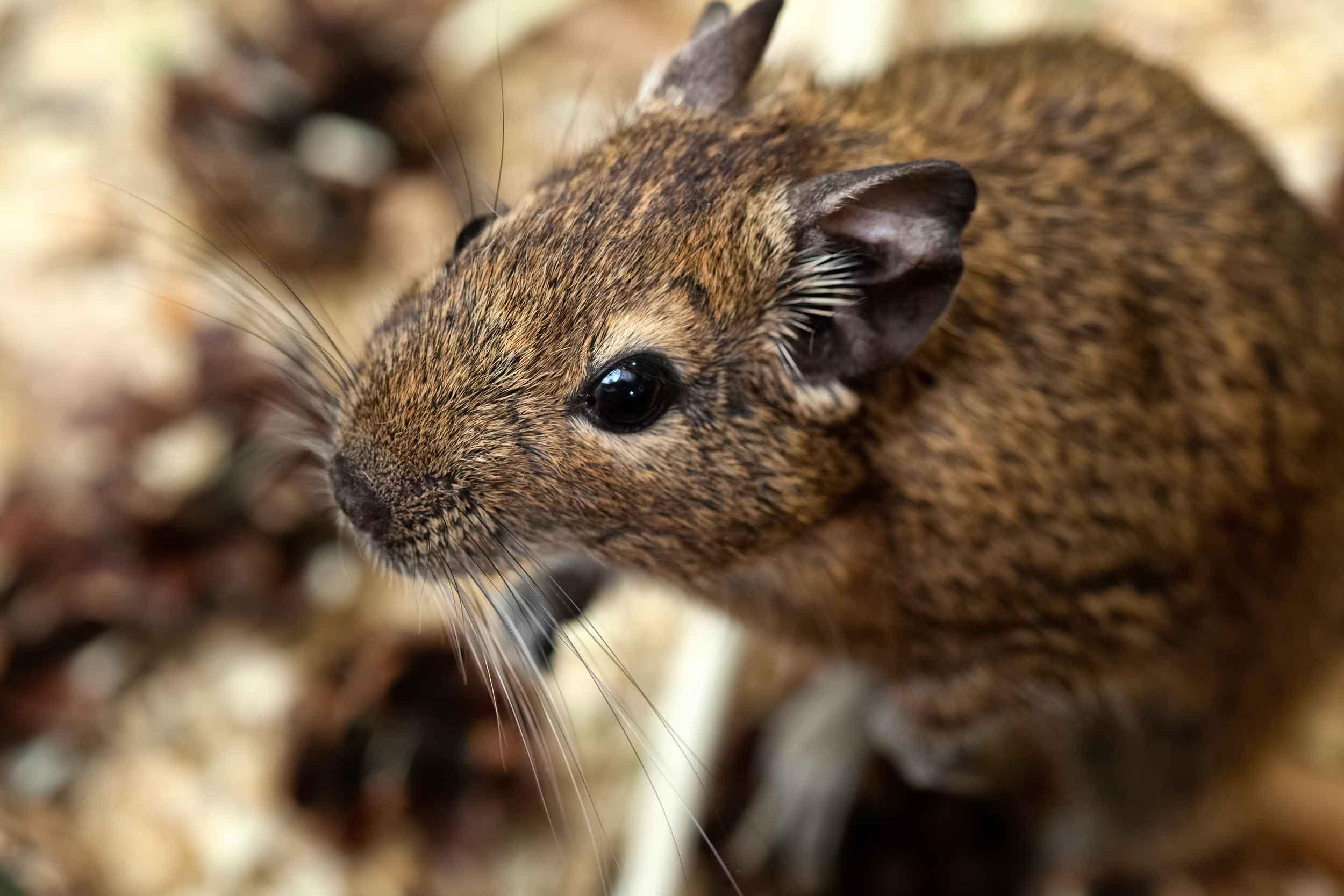 Services-Rats-Mice-Squirrels