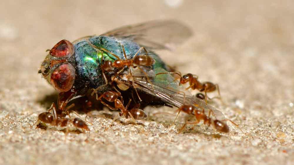 BPC-About-Exterminators