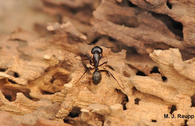 BPC-Services-Ants-06