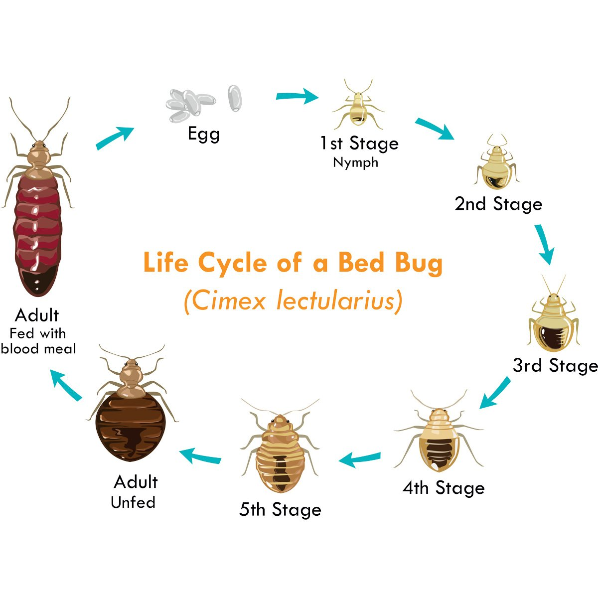 BPC-Services-Bed Bugs & Other Specialty Pests-02