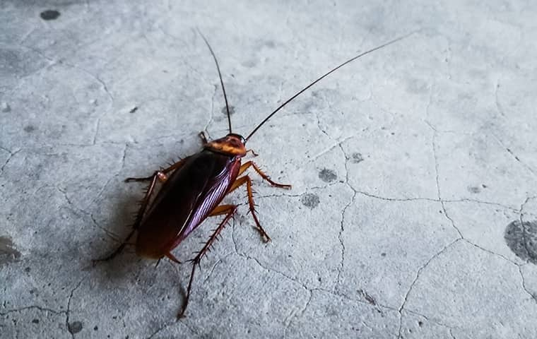 BPC-Services-Cockroaches-Beetles-Roach3