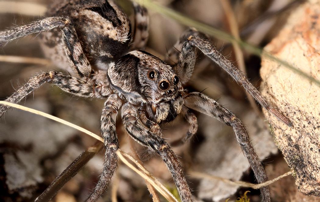 BPC-Services-Spiders-Spyder7