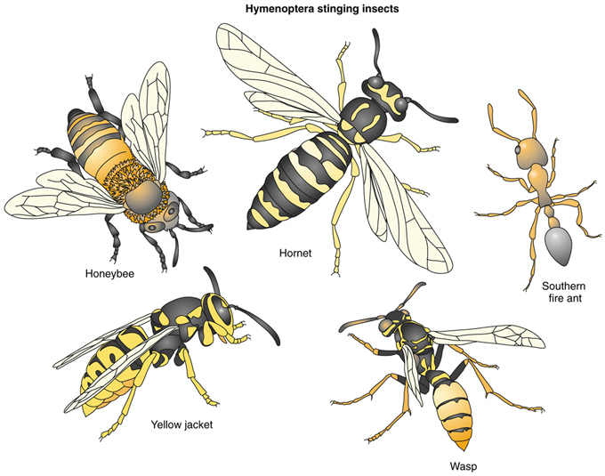 BPC-Services-Wasps-Bees-BeesWasps4