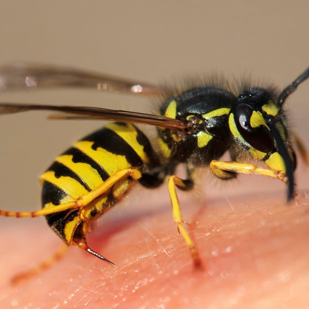 BPC-Services-Wasps-Bees-Wasps1